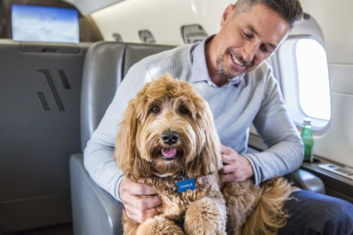 Man with his dog on a private jet